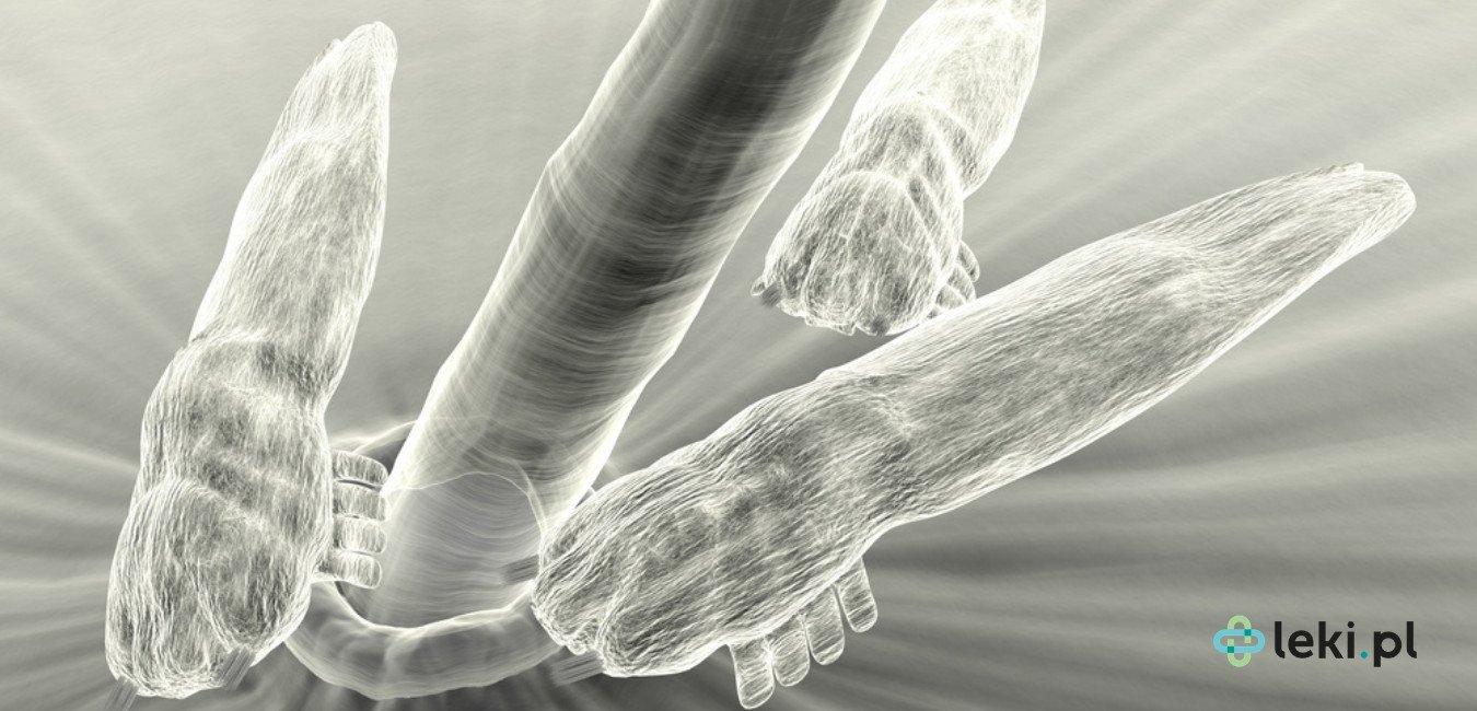 Nużeńce są jednymi z najliczniej występujących ektoparazytów na powierzchni ludzkiej skóry. (fot. Shutterstock)