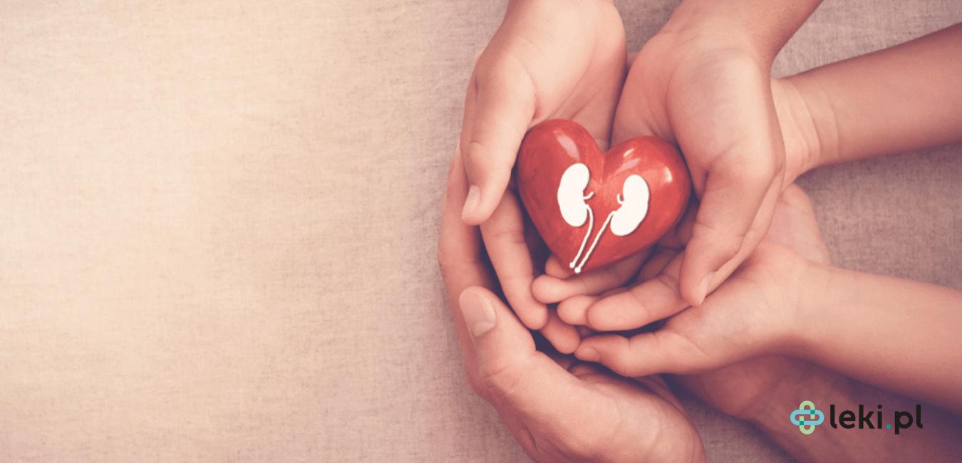 Nerki to jeden z najważniejszych narządów ludzkiego organizmu. Biorą one udział m.in. w usuwaniu z ustroju szkodliwych substancji. (fot. Shutterstock)