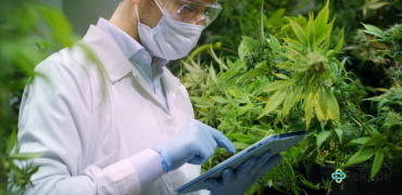 Czym jest medyczna marihuana i jakie daje nadzieje na leczenie?