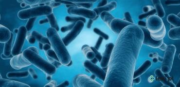 Superbakteria New Delhi — czy stanowi zagrożenie dla życia?