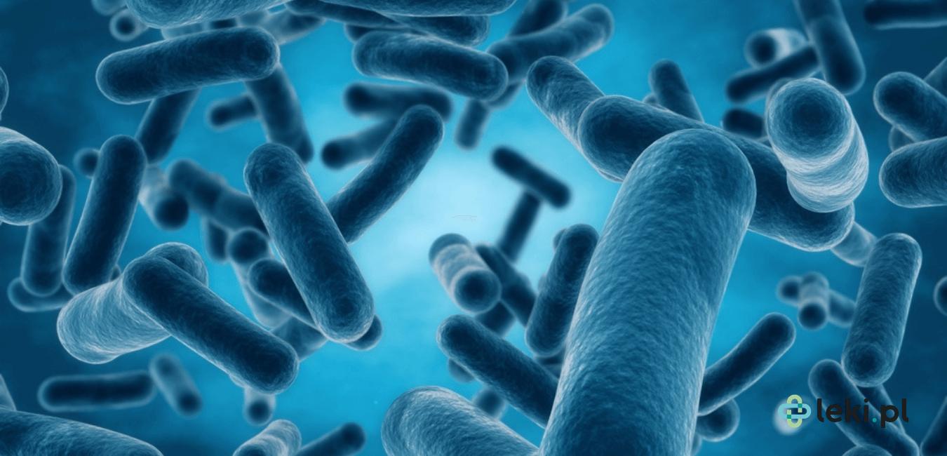Odkryta w 2009 roku superbakteria New Delhi jest przykładem patogenu, wobec którego nie ma żadnego skutecznego leku przeciwbakteryjnego. (fot. Shutterstock)