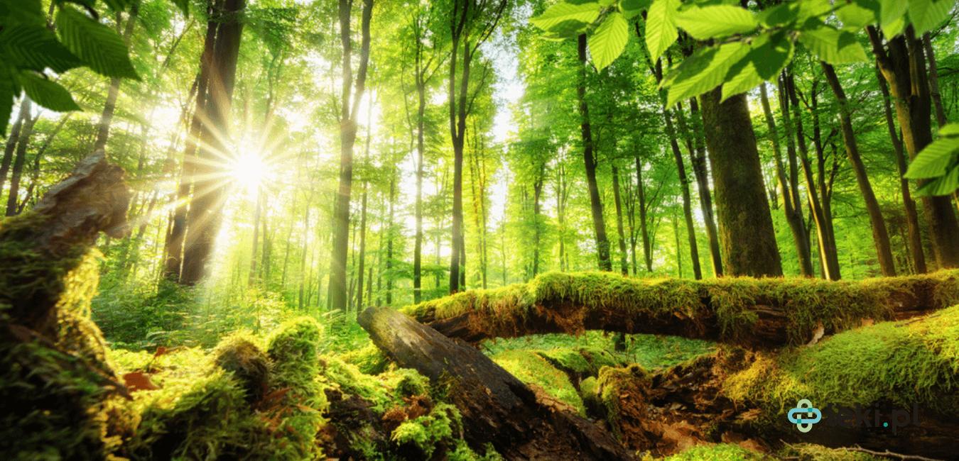 System ochrony zdrowia wykazuje kilka podobieństw do ochrony środowiska. Są to takie zjawiska, jak: mutualizm, komensalizm i protokooperacja. (fot. Shutterstock)