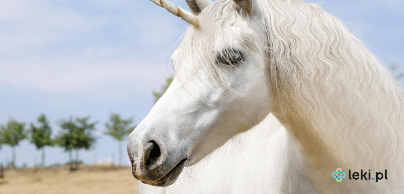 Surowce pochodzenia zwierzęcego są rzadko wykorzystywane w farmacji. Niegdyś jednak były popularne, zwłaszcza rogi jednorożca. Czym one są? (fot. Shutterstock)